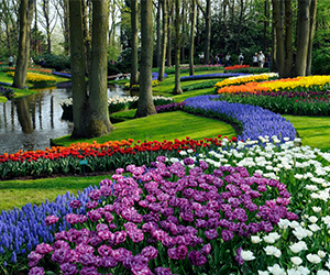 Group-private-excursion-keukenhof-Holland-home-of-flowers-ZOYO-Travel.jpg