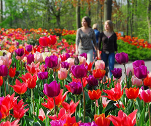 Group-and-private-excursions-to-Keukenhof-more-then-7-million-flowers-ZOYO-Travel.jpg
